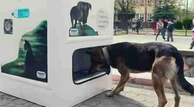 maquina-alimenta-perros-callejeros